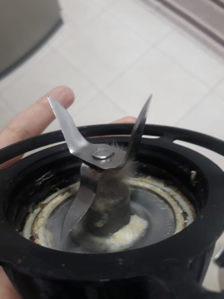 Como está seu liquidificador? A importância da correta higienização na sua cozinha
