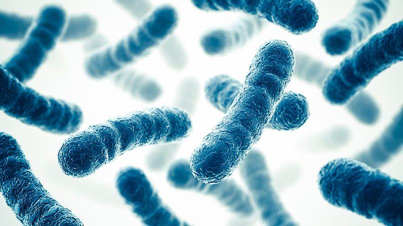 Guia da ANVISA para avaliação de probióticos em alimentos